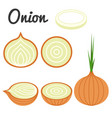 set of fruit and vegetable onion vector image