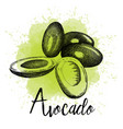 avocado in hand drawn graphics vector image