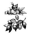 branch black ink drawing vector image vector image