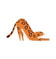cartoon flexible bengal cat breed flat vector image vector image