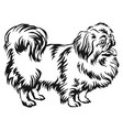 decorative standing portrait of dog pekingese vector image vector image
