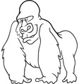 gorilla for coloring book vector image