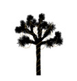 joshua tree silhouette decorated with christmas vector image vector image