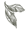 leaf on branch flora monochrome sketch outline vector image