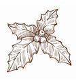 mistletoe traditional plant on christmas vector image vector image