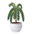 office palm tree isolated on white background vector image vector image