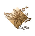 template coffee branch rhombus vector image vector image