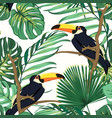 toucan birds natural habitat in exotic tropical vector image
