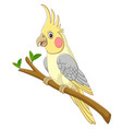 cartoon yellow cockatiels sitting on a tree branch vector image vector image