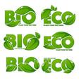 collection bright and shine leaf signs symbols vector image