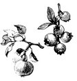 fruit branches black ink drawing vector image
