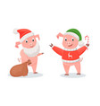 new year pigs in santa costume and knitted sweater vector image