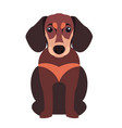 cute dachshund dog cartoon flat icon vector image vector image