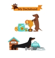 Dachshund dog playing infographic vector image