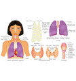 organs of chest vector image vector image