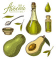 tropical avocado set of evergreen fruit plant vector image vector image