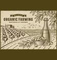 olive organic farming landscape vector image