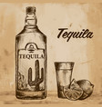 bottle of tequila with lime and glass painted by vector image vector image