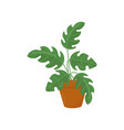 icon of houseplant with wide green leaves vector image vector image