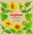 sunflower frame vector image