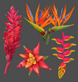 exotic flowers and leaves set floral elements vector image