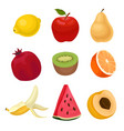 flat set of fresh fruits sweet and tasty vector image