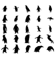 Penguin silhouettes set vector image