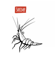 Shrimp black and white vector image