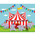 Elephant show at the circus vector image vector image