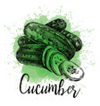 hand drawn of a cucumber vector image