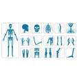 human bones orthopedic and skeleton icon set vector image vector image