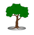 isolated single old tree vector image vector image
