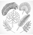 palm leaves silhouette set outline vector image