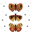 poster with mystic moths and butterflies vector image vector image