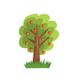 apple tree on a white vector image vector image