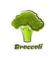 Cartoon fresh green healthy broccoli vegetable vector image vector image