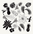 collection of tropical plants leaves and flowers vector image vector image