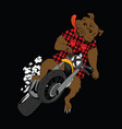 funny bear riding motor bike vector image vector image