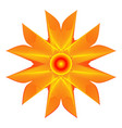orange flower on a white background vector image vector image
