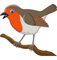 cartoon beautiful robin bird vector image vector image
