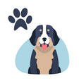 heavy bernese mountain dog paw print flat design vector image