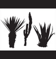 black silhouette aloe and cacti vector image