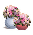 set potted flowers isolated on white background vector image