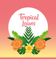 tropical leaves banner template fashion decoration vector image vector image
