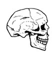 hand-drawn human skull from side vector image vector image