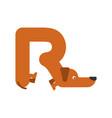 letter r is dog pet font dachshund alphabet vector image vector image