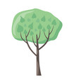 tree with green leaves green stylish plant vector image