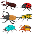 Cartoon funny beetle collection vector image