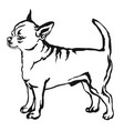 decorative standing portrait of dog short haired vector image