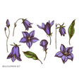 set hand drawn colored bellflower vector image